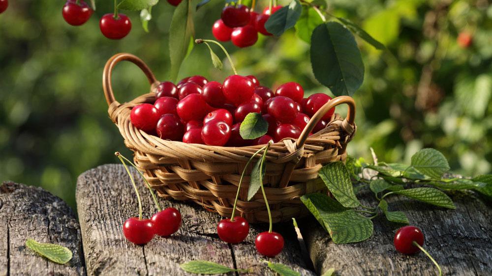 kanegrade-cherry