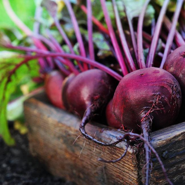 kanegrade-vegetable-juice-concentrates-ingredients